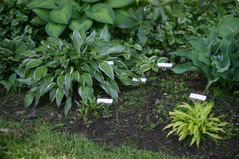 Gratz garden 5