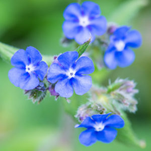 identifying flowers